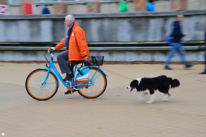 ©Barry Sandland/TIMB - Man on a bike with his dog on the beach in Ostend