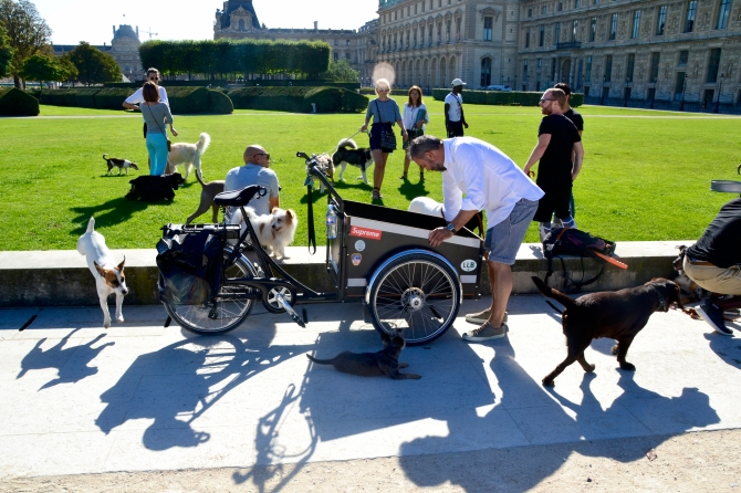 Barry Sandland/TIMB - Cargo bike rider w a pack of dogs at a training park in Paris